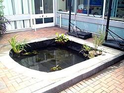 School Ponds