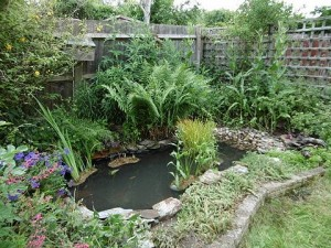Pond Cleaning Hitchin 2015