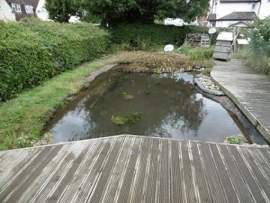 Graveley Primary School Pond