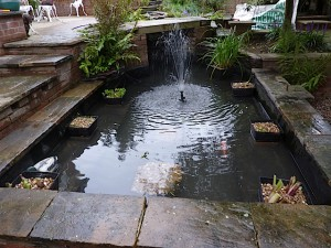 Pond Cleaning - after
