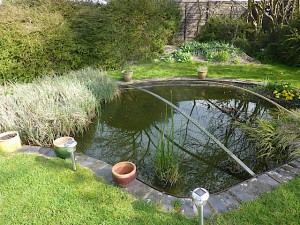 Pond Cleaning - before