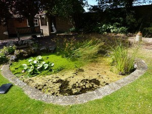 Pond Cleaning Redbourne - before